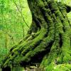 Пользовательские фото стены Бумага 3D Европейские Зеленые Лесные Деревья 3D Природа Ландшафт Спальня Гостиная Диван Фон 3D Обои Фрески голубое небо белые облака зеленые листья голуби потолочные фрески пользовательские фото бумага