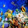 Бесплатная доставка Подводный мир Тропическая рыба покраска магазин ресторан украшение самоклеящиеся пол фрески 250cmx200cm