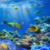 Пользовательские обои Mural HD Красивые Подводные мир Тропические рыбы Потолочные фрески Ресторан Дети Спальня Фон 3D Стены Бумага бар потолочные фрески