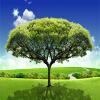 Пользовательские 3D-обои для фото обои Дизайн спальни 3D Большой HD Mural Grassland Зеленые деревья Изучение комнаты Фон Декор настенные обои для спальни
