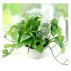 mymei Автоматический полив орошение Колос садовое растение цветок Капельный Разбрызгиватель воды капельный полив росинка аква коста бланка n0156