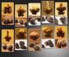 30 бутонов ассорти черный Цветущий чай * бесплатная доставка