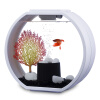 AA аквариум аквариум аквариум аквариум со вкусом дизайн круглый стеклянный сенсорный Deco O мини-светодиодная лампа белого куплю аквариум бу томск северск