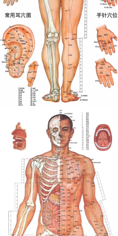 标准人体经络放大图