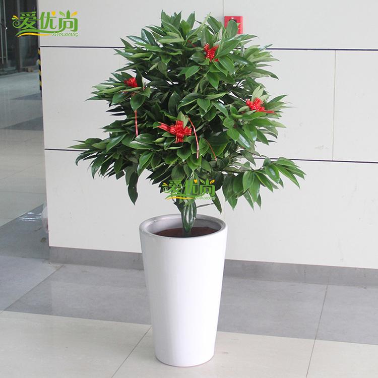 室内客厅盆栽植物