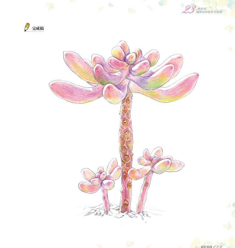 经典全集 彩铅多肉植物手绘画入门临摹教程书籍彩色铅笔自学圣经温情