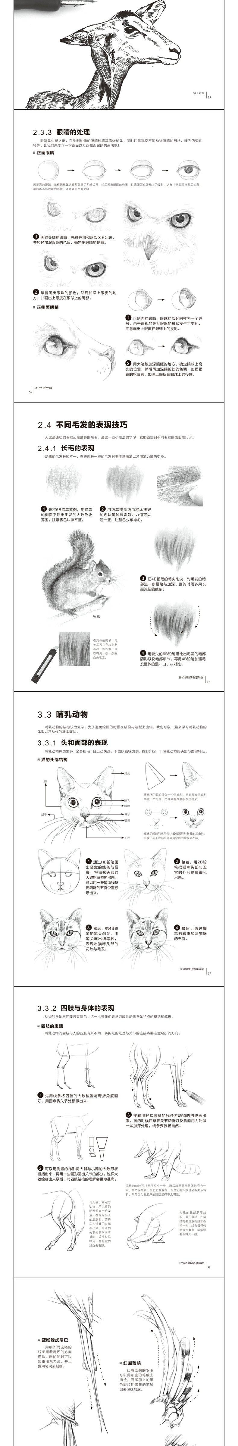 素描/速写 正版 铅笔素描从入门到精通动物篇 铅笔零基础入门初学者自