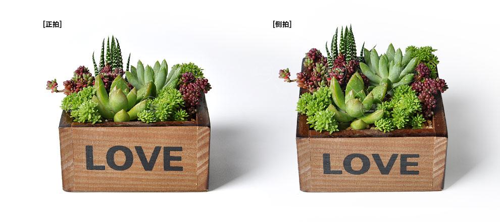 【缀生活】多肉植物组合盆栽