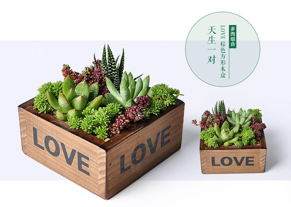 【缀生活】多肉植物组合盆栽 创意微景观 情人节生日礼物 手工制作