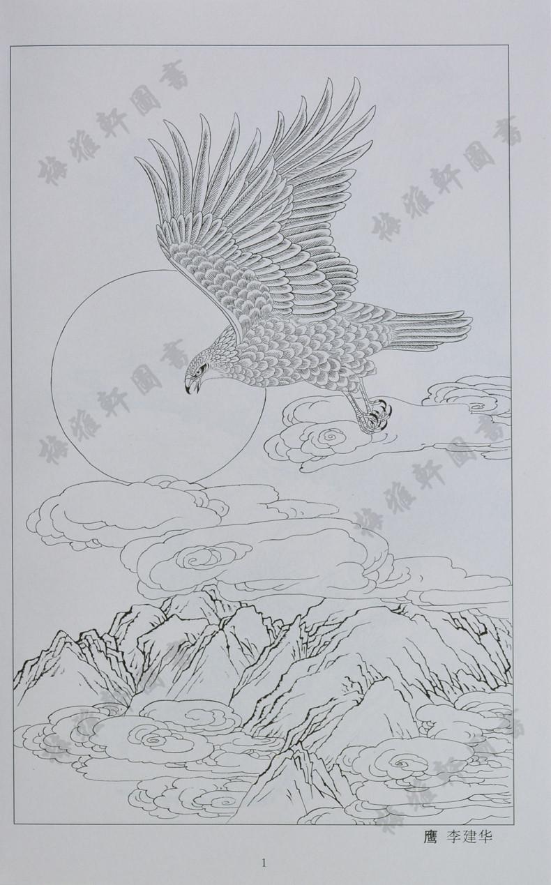 现代花鸟线稿