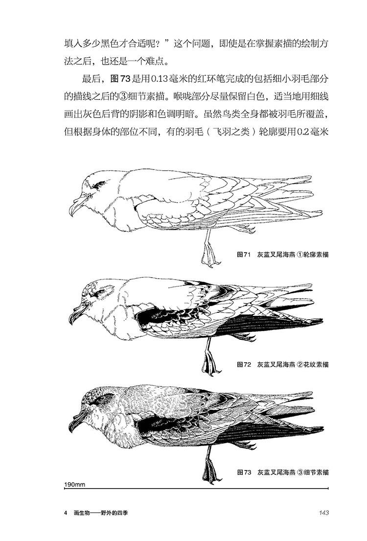 如何描画生物 手绘 速写 素描画法 自然 生物 科普 博物 自然科学