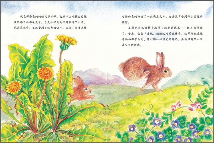 《西顿动物故事小百科》(全五册)
