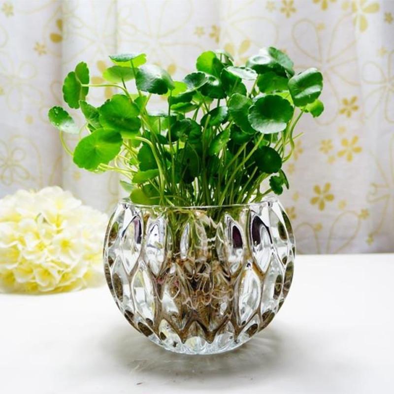废玻璃瓶子做花盆图片步骤图