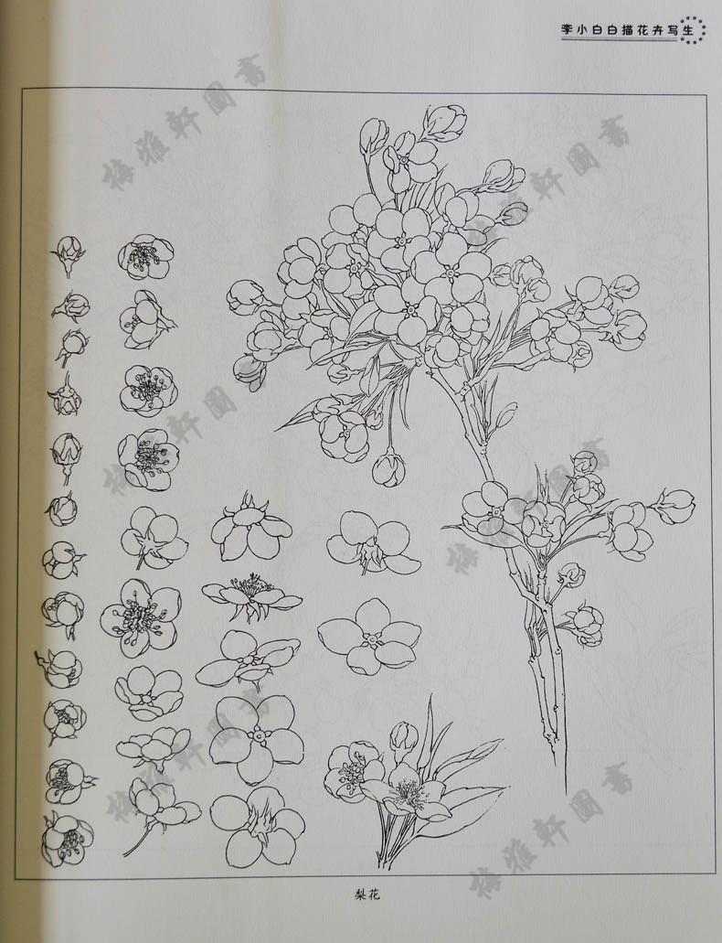 儿童画梨花简笔画图片
