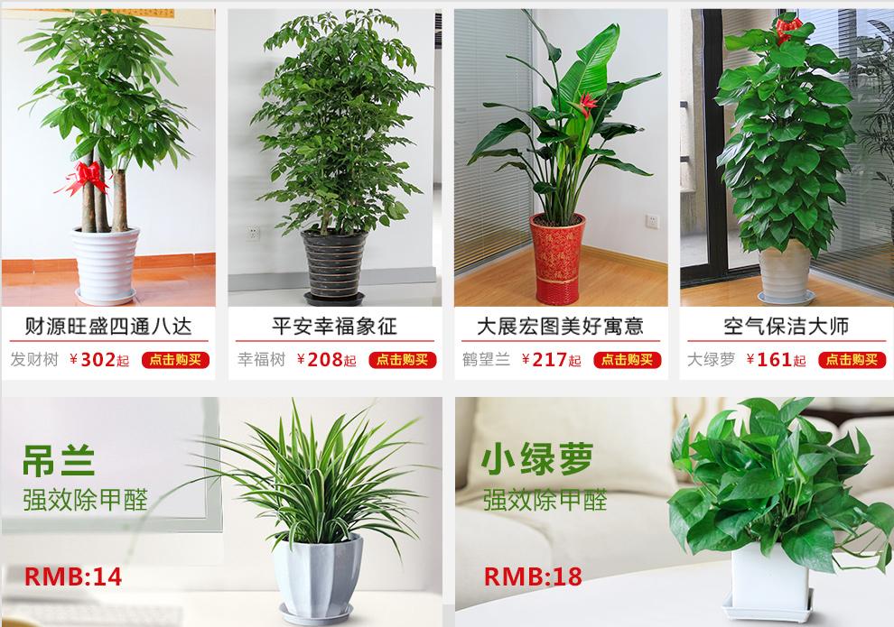 爱优尚 也门铁盆栽办公室绿植花卉室内大型植物盆景吸