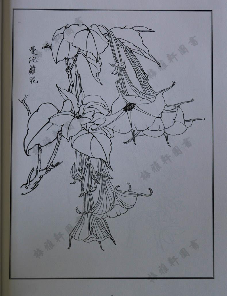 花卉图谱集萃 国画工笔白描线描底稿画稿画谱 入门教程 荷花牡丹菊花图片