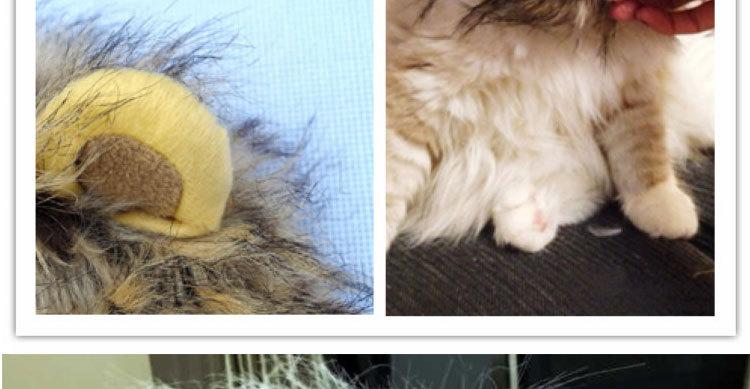 猫咪假发搞笑狮子头套帽子 猫咪变装饰品 欧美 现货 白色