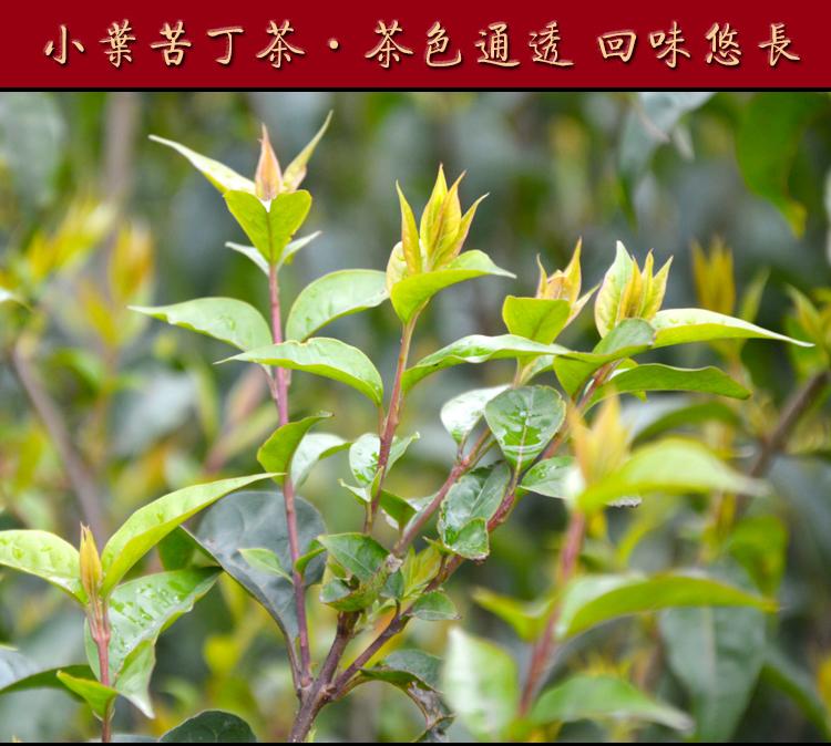 3袋 贵州特产 余庆小叶苦丁茶袋泡茶发酵茶 毛冬青野生苦丁茶 200g/袋图片