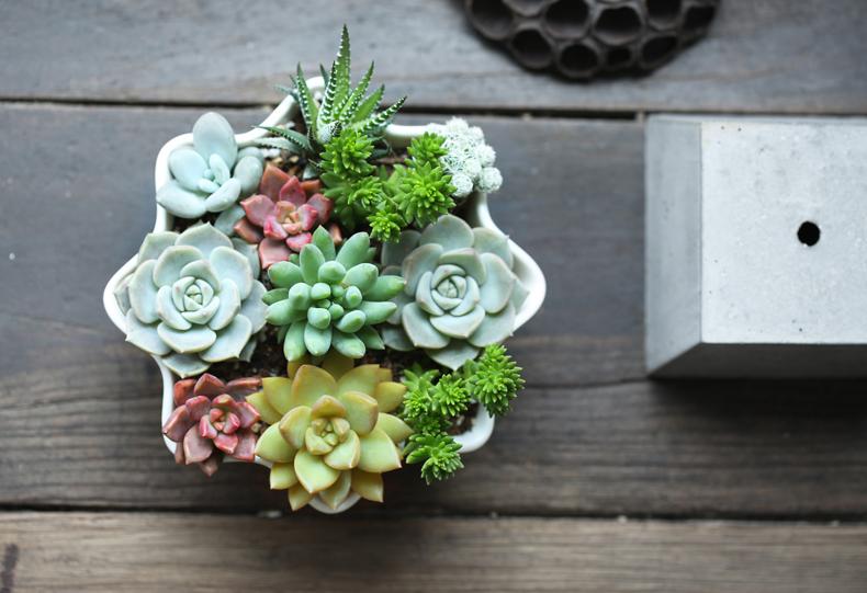 多肉植物批发创意迷你小盆栽组合肉肉植物办公室桌面