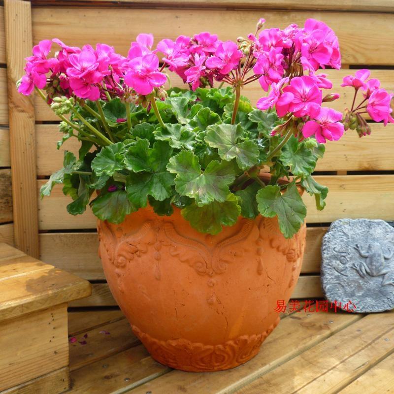 花园阳台欧式红陶花盆