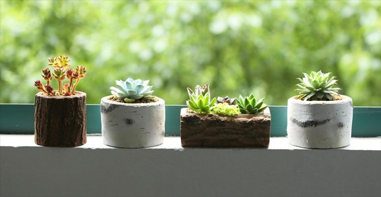 盆景 盆栽 瓶子 植物 750_389图片