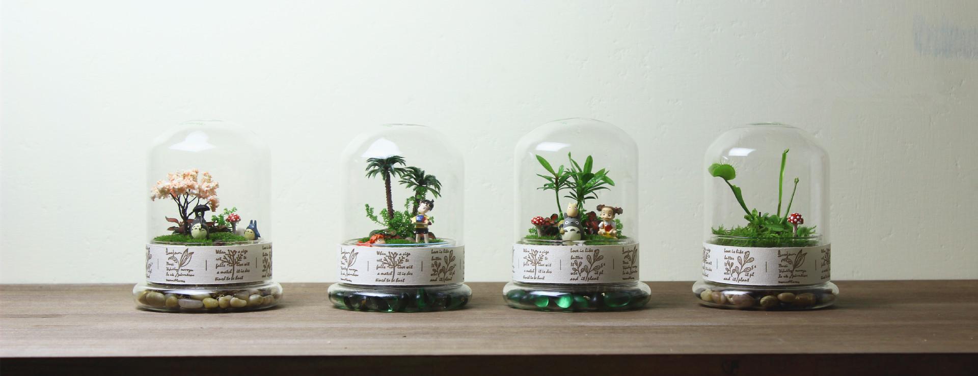 乾宸 毕业礼物微景观植物生态瓶 瓶子微景观玻璃罩 送