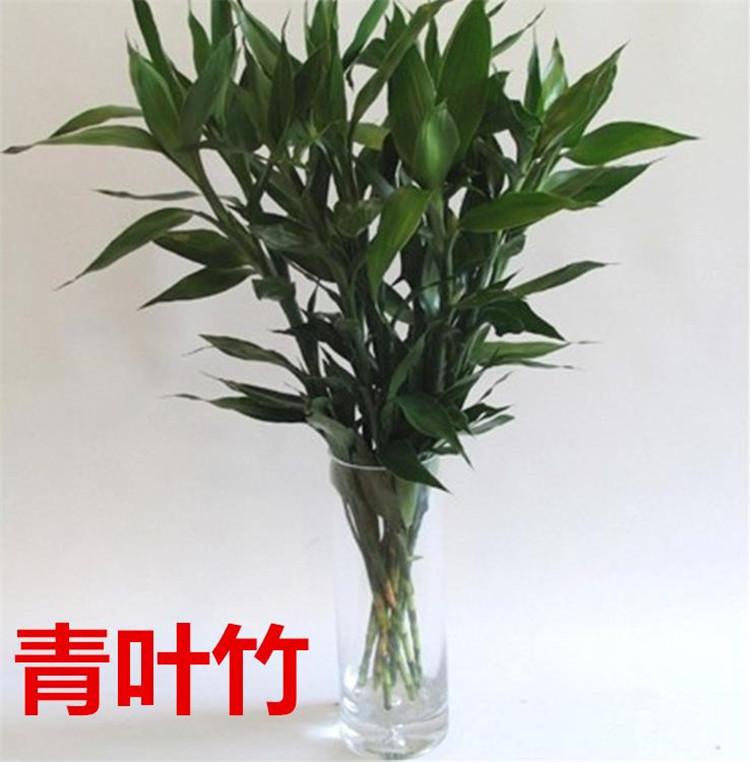 淘花源记绿植 青叶富贵竹 金叶富贵竹 转运竹 竹塔小五层 六角花瓶