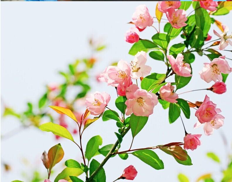 开花大苗室内外绿植物花卉