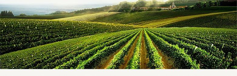 法国拉菲珍酿梅多克法定产区红葡萄酒750ml单支礼盒(asc正品行货)