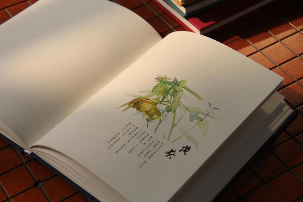 《草木多闻原创手绘笔记本》【摘要