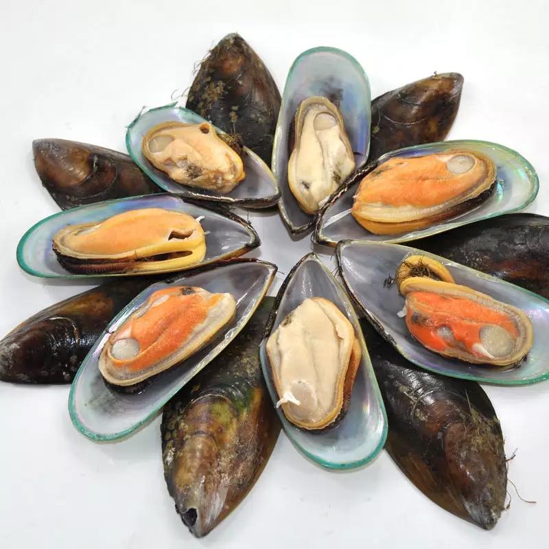 森鲜 新西兰进口青口贝 全壳 1000g 翡翠贻贝 原生态海域直发