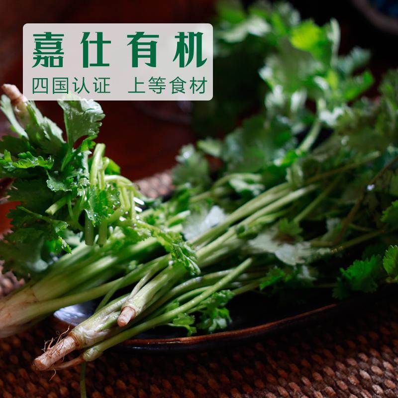 嘉仕有机蔬菜 新鲜有机香菜 50g×3份装 仅江浙沪皖配送 上海崇明农场直供