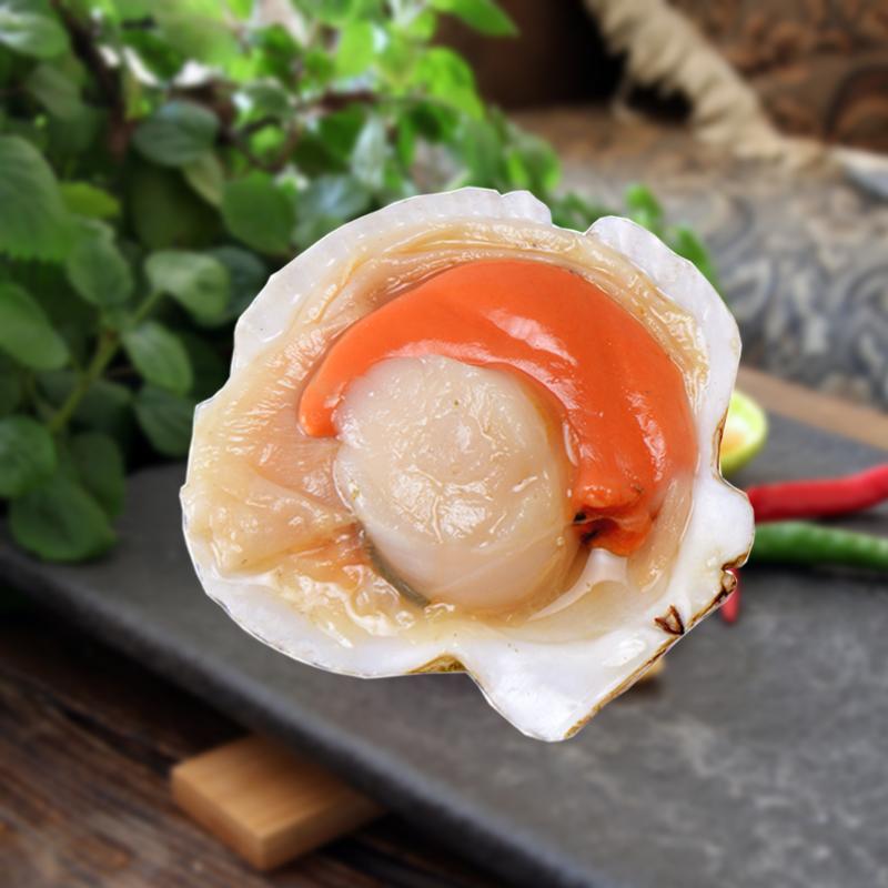 【鲜当购】北海道野生半壳扇贝L号1000g 原味贝肉品质