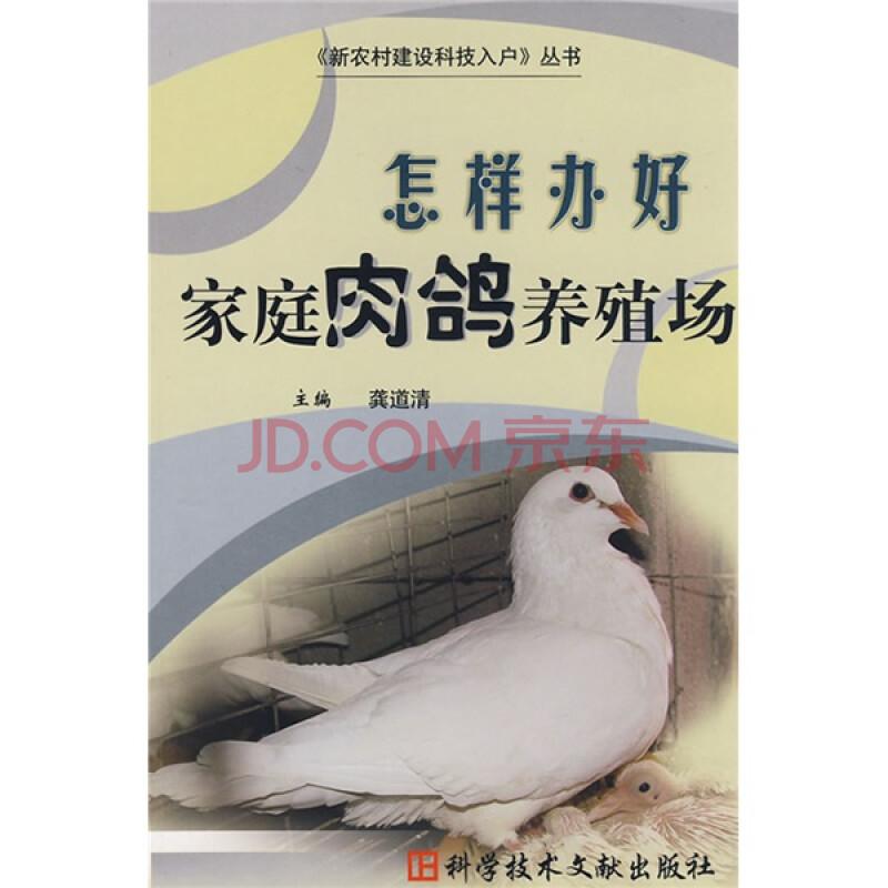 肉鸽 家庭/怎样办好家庭肉鸽养殖场图片