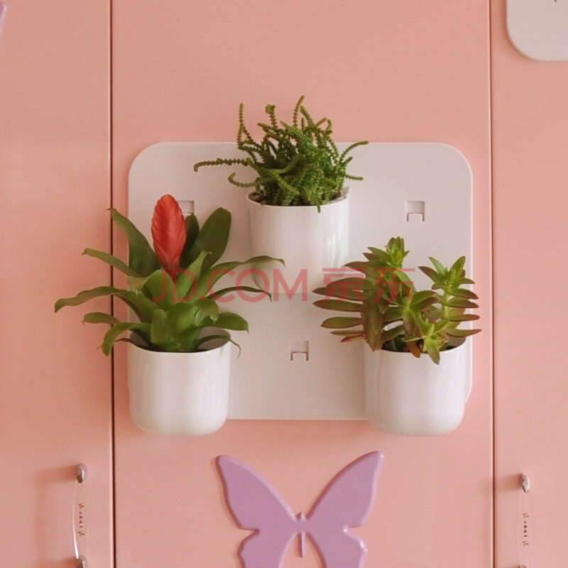 室内花卉防辐射多肉植物盆栽