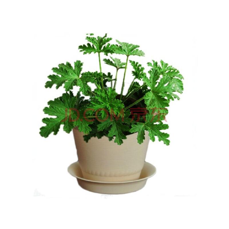室内植物花盆栽盆景 室内小盆栽花 盆栽花的种类和名称