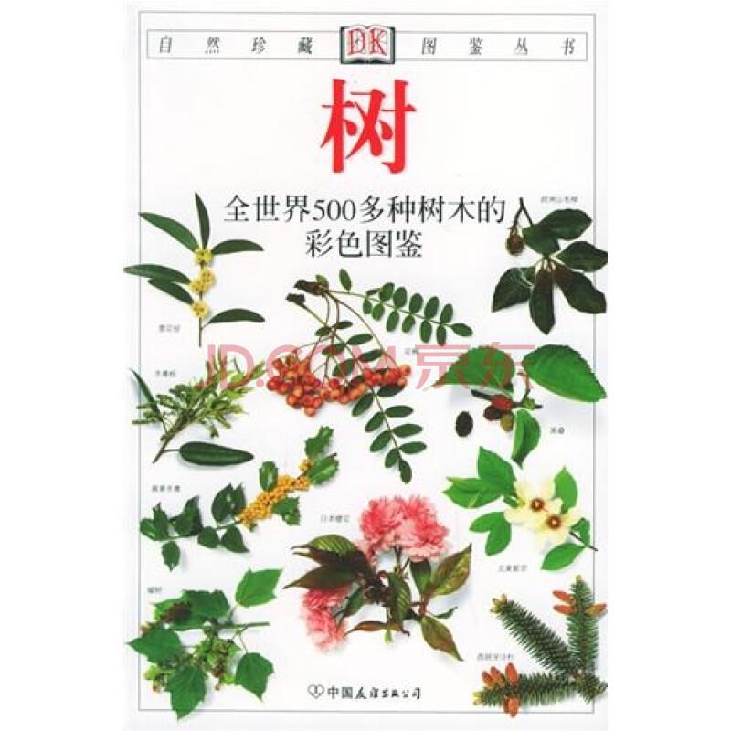 cad植物图例南洋杉