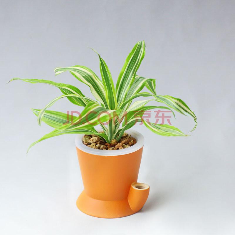 创意盆栽植物图片