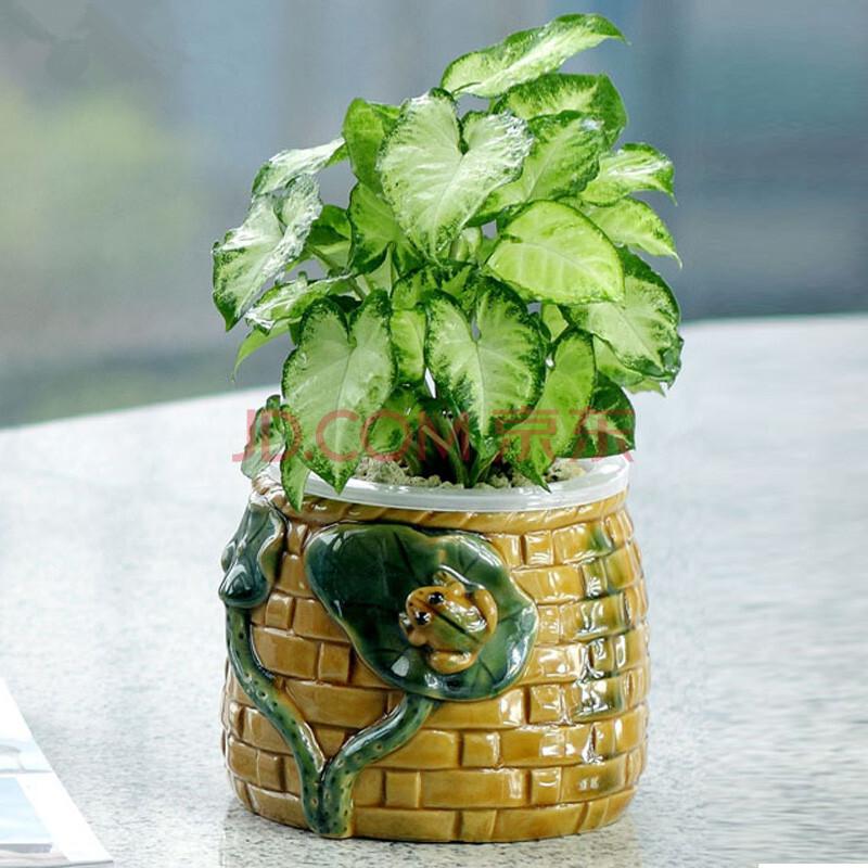 盆栽 植物 800_800