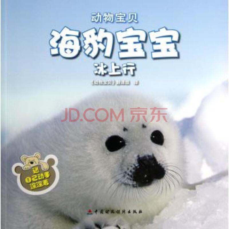 海豹宝宝冰上行/动物宝贝