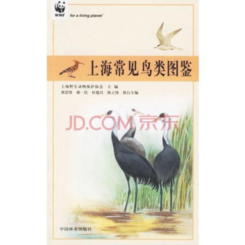 上海常见鸟类图鉴--上海市绿化林业科普丛书