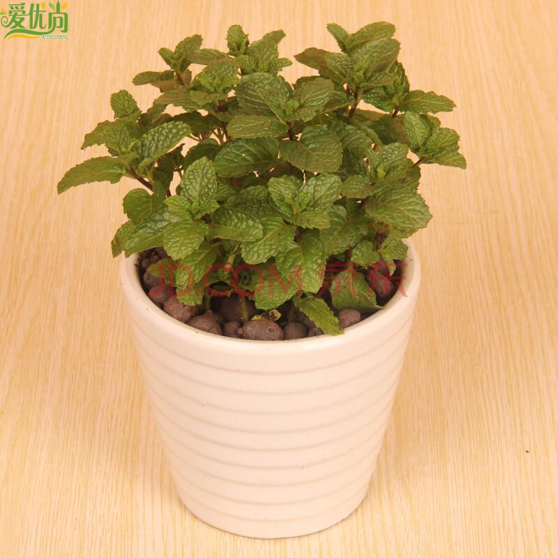 阳台小盆栽植物图片