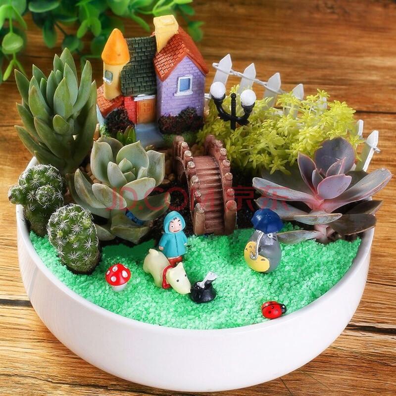 逍遥园艺 多肉植物组合盆栽套餐diy/ 含盆/花卉创意多肉拼盘套装/礼品