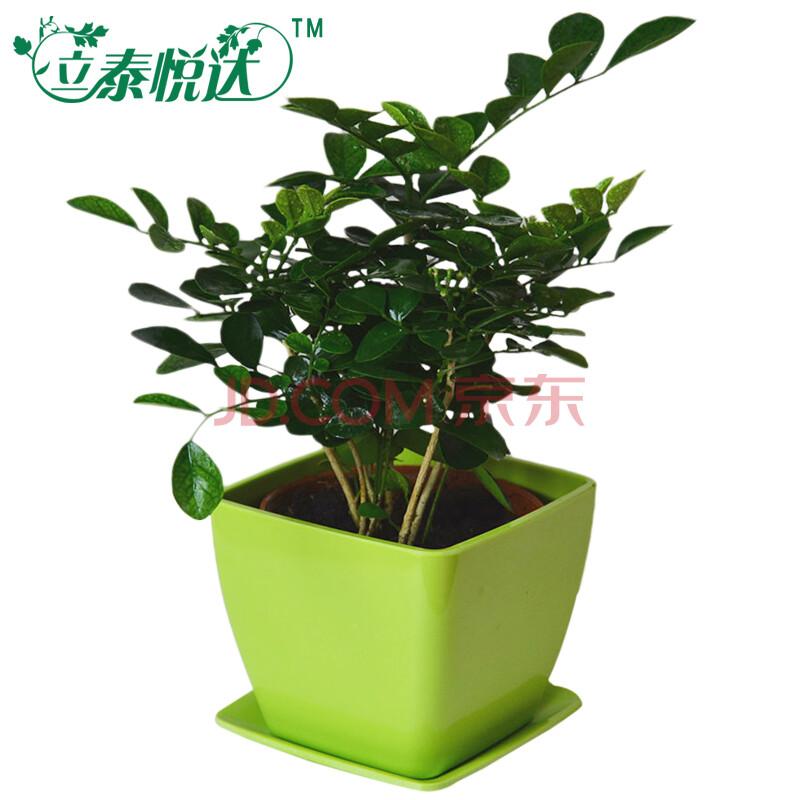 【立泰悦达】绿色盆栽植物