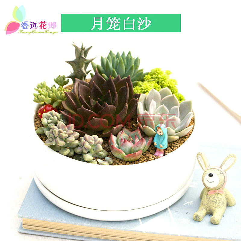 香远花邺 多肉植物组合盆栽套餐diy创意办公室绿植花盆拼盘阳台盆景