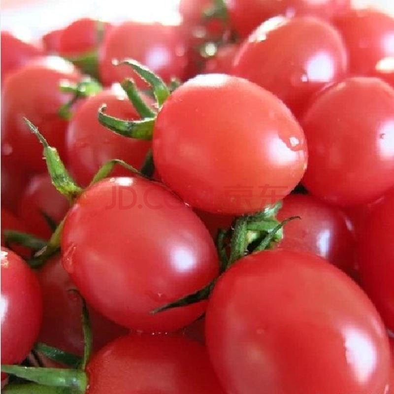 圣女果和小番茄的区别_圣女果跟小番茄的区别