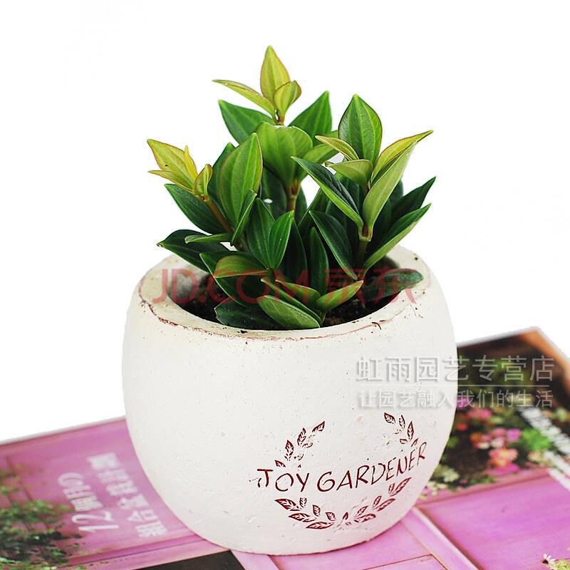 办公室绿植 小景观观叶植物