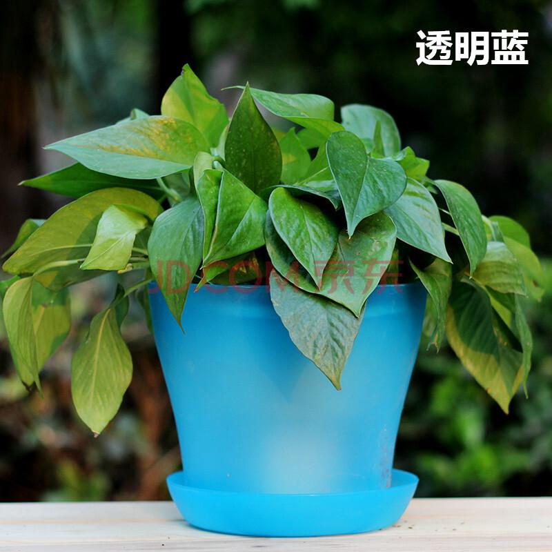 背景 壁纸 绿色 绿叶 盆景 盆栽 树叶 植物 桌面 800_800