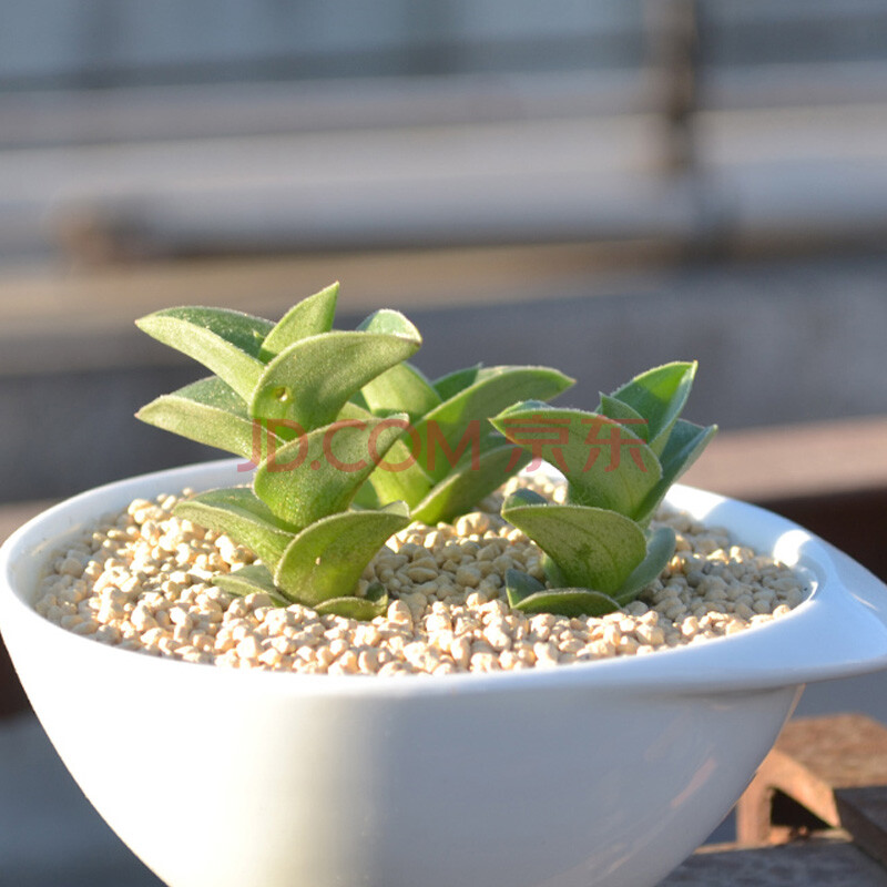 多肉植物组合盆栽 防辐射肉肉植物 办公室桌面含花盆绿植 好养肉肉