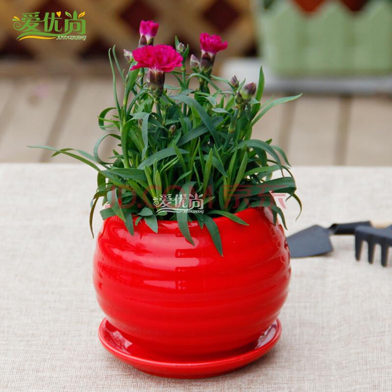 爱优尚康乃馨植物盆栽母亲花颜色随机发净化空气防辐射室内桌面 红